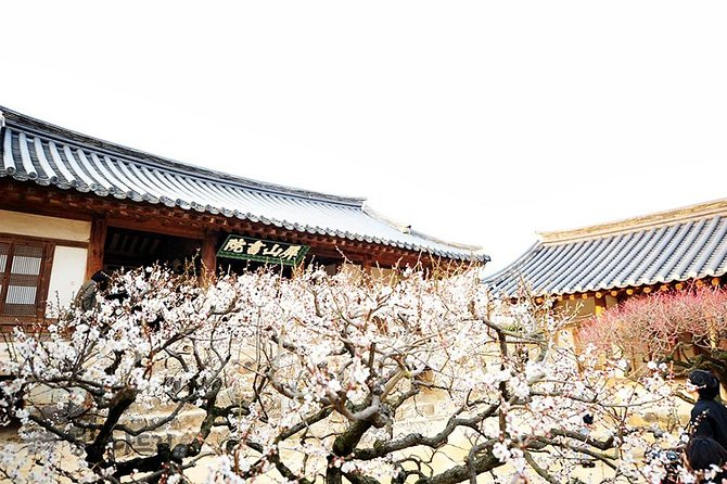 MÁS FOTOS, The Beauty of the Korea Cherry Blossom Discover 9days 8nights
