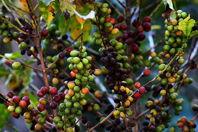 Coffee tour in Philadelphia Farm Guatemala, one day tour, Antigua, GUATEMALA