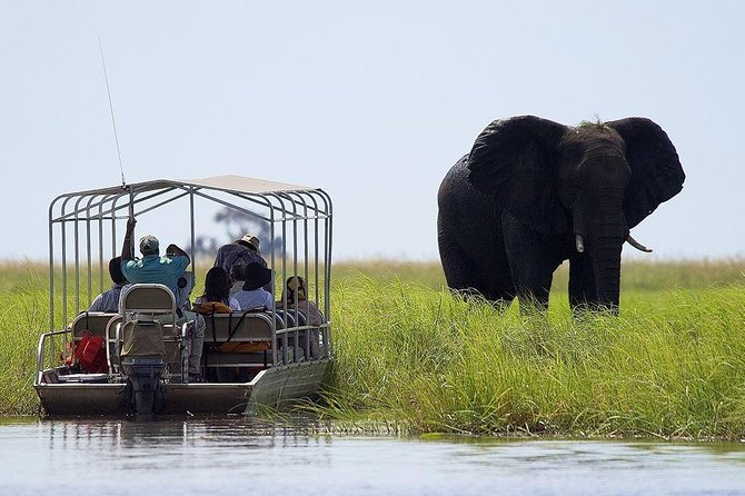 Take a 3-hour game drive through Chobe National Park and discover some of Botswana's diverse wildlife. Visit the park's four distinct ecosystems and see a number of animals including buffalo, giraffe, hippo, lions, leopards, and elephants. The park is home to a massive elephant population of about 50,000 and over 460 bird species spread across 11,700 square kilometers. Enjoy light snacks and refreshments half way through your game drive.