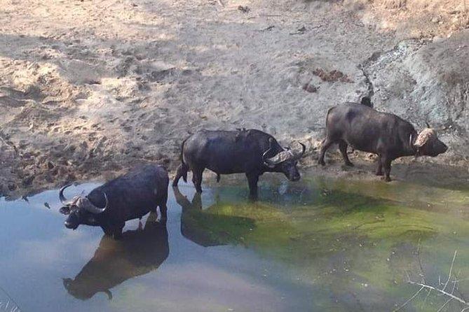Livingstone To Lower Zambezi Round Trip, Livingstone, Zimbabwe