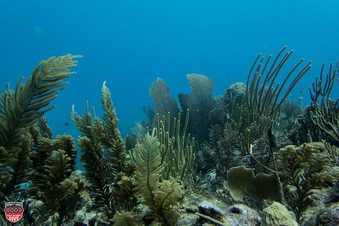 Excursión de buceo de superficie: cenote arrecife, Tulum, MEXICO