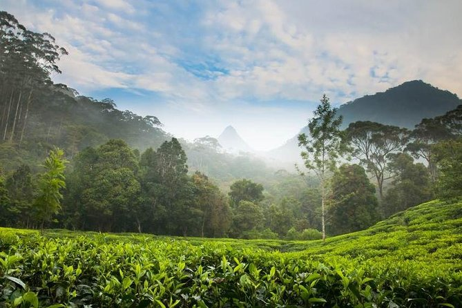 Day Trip to Nuwara Eliya with Kingfisher Tours, Colombo, Sri Lanka