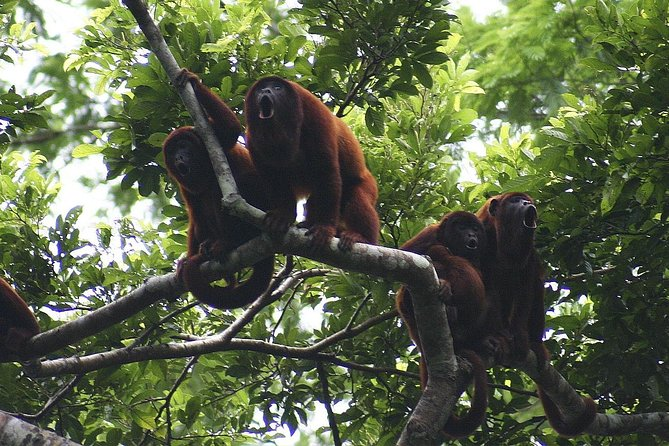4-day Tambopata Ecolodge Rainforest Adventure Tour, Puerto Maldonado, PERU