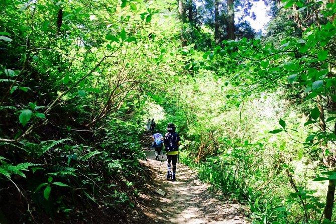 MÁS FOTOS, Tour del Monte Takao para hispanohablantes