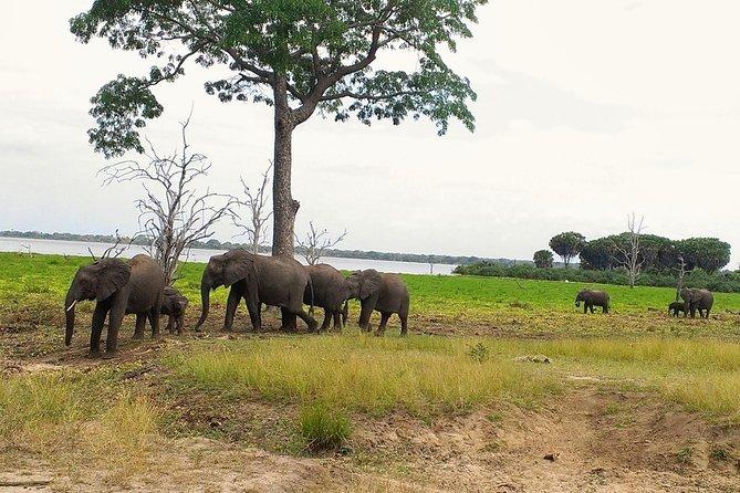 • Boat Safari <br> • Walking Safari in the wild <br> • Unlimited game drive inside the reserve <br> • Selous Game Reserve three days Safari from Dar es Salaam