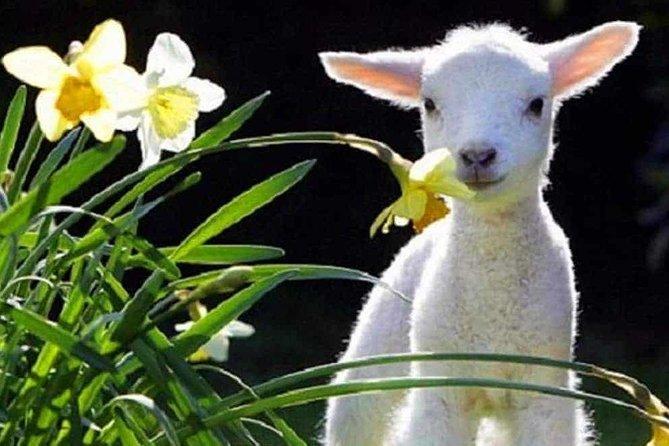 Lyttelton Cruise Excursions: Christchurch Sightseeing with Sheep Farm, Christchurch, NOVA ZELÂNDIA