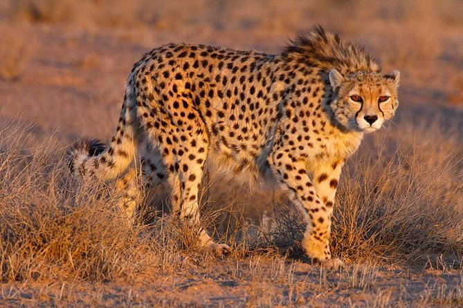 8 Days tanzania wildlife safari, Arusha, TANZANIA