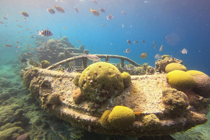 If you are curious to explore the gorgeous underwater world, then this snorkel / sightseeing tripis exactly what you are looking for. It takes about 3 hours to show you around our beautiful reefs, tell a bit about the wonders of Curacao and enjoy the island underwater and above.