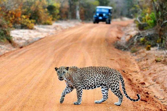 2 Days Tour to Yala Safari & Udawalawe Safari From Ahungalla & Kosgoda- All Inclusive, Parque Nacional Yala, Sri Lanka
