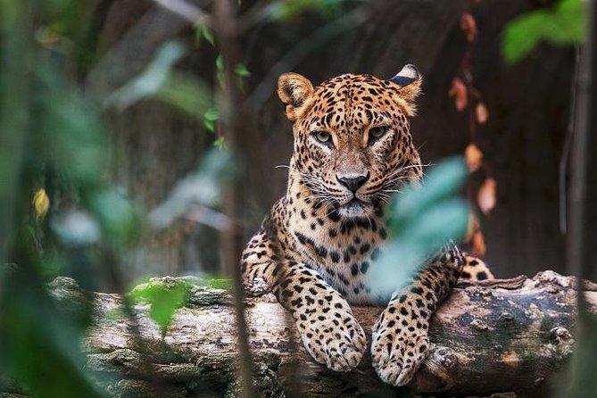Yala National Park safari from Mirissa, Colombo, Sri Lanka