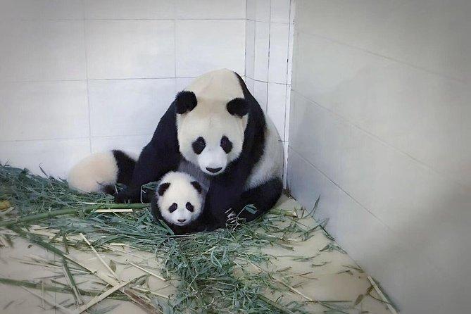 Chengdu Giant Panda Base and Global Center Shopping Private Day Tour, Chengdu, CHINA