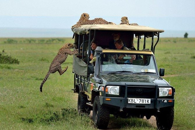 3 Days/ 2 Nights Ngutuni Lodge & Saltlick Lodge Safari from Mombasa takes you to explore two great park near Mombasa...ie Ngutuni sanctuary and Taita Hills Game SanctuaryOur 3 Days safari begins with Ngutuni sanctuary - a 10,000 acre private game sanctuary, surrounded on three sides by Tsavo East National Park.with view of the Sagala Hills and others nearby, only 2.5 hours drive from Mombasa and its international airport.Ngutuni sanctuary and the surrounding national park is best known today for their fantastic variety of wildlife including lion, cheetah, elephant, buffalo as well as a huge variety of plains game and bird life.It is only in Ngutuni Sanctuary,