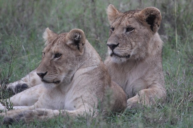 6 Days 5 Nights Africa wildlife dream Safari, Arusha, TANZANIA
