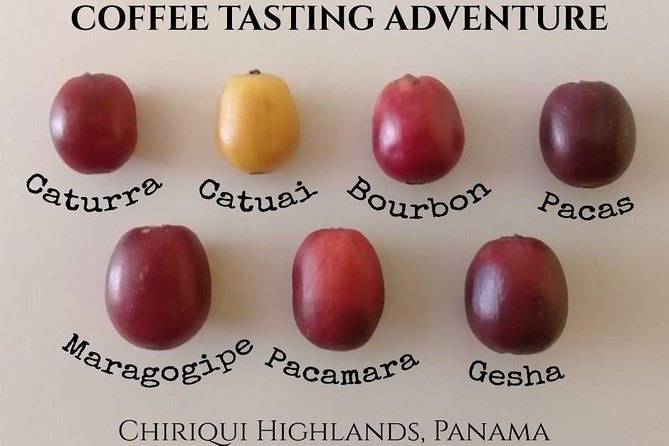 MÁS FOTOS, Geisha Coffee Tasting Experience