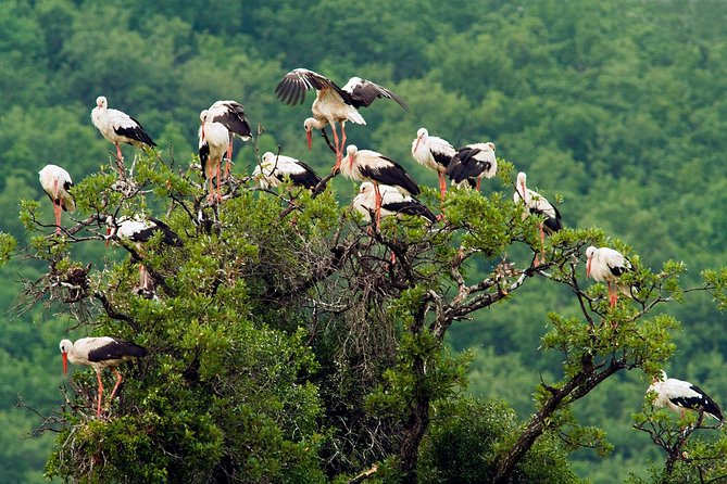 Birdwatching and cultural heritage tour from Varna, Varna, BULGARIA