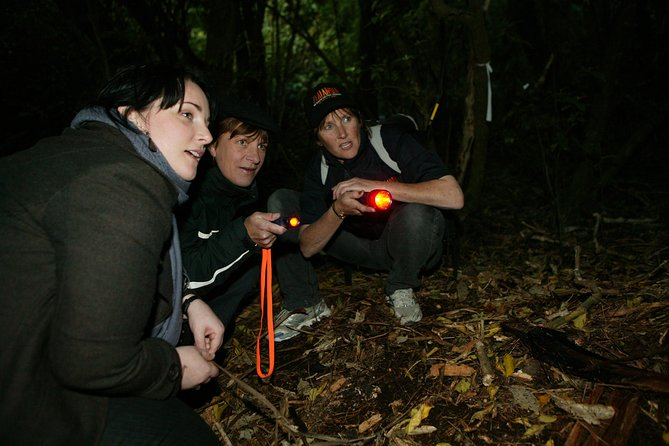 Explore the sanctuary by torchlight as your guide leads you in search of some of the more distinctive sights and sounds of New Zealand's native forest. Enjoy a night discovering New Zealand's evolution and natural history at Zealandia, located just minutes from central Wellington. The discovery begins with a guided tour through Zealandia: The Exhibition, a state-of-the-art indoor exhibition showcasing New Zealand's natural history and world renowned conservation movement. As darkness falls, your guide will lead you into the Sanctuary Valley, the world's first fully fenced urban eco-sanctuary in search for little spotted kiwi and the many other nocturnal animals that call the sanctuary home. This is an unforgettable Wellington experience not to be missed!