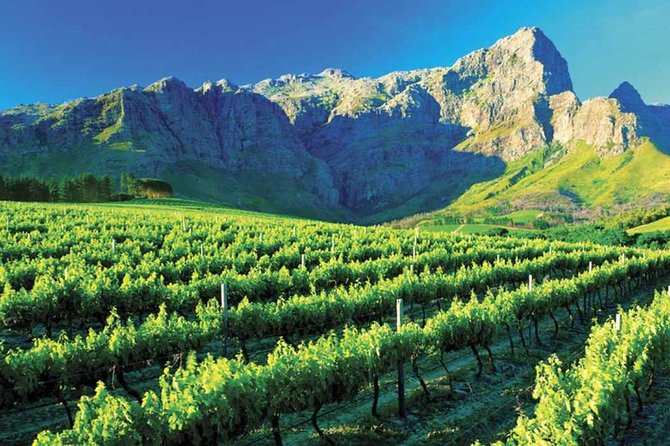 Cape Town Wine Tour & Tasting, Ciudad del Cabo, South Africa