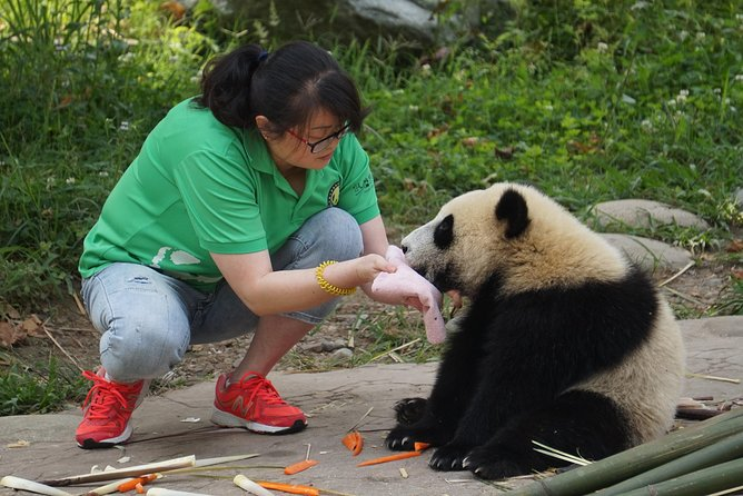 Dujianyan Panda Base is one of the few bases offer panda volunteer program in China. The full day program include panda food making, panda enclosures cleaning, panda feeding and features of documentary video of releasing panda to the wildness. Accompanied by a professional panda expert who will introduce you the topics of the panda discovery, the history of panda in China, the classification, and panda conservation. Dujiangyan Panda Base is dedicated to the study of disease control and rescue of wild pandas where you will contribute to the conservation of endangered panda bears!