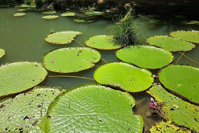 Amazon Natural Museums Combo (INPA and MUSA), Manaus, BRASIL