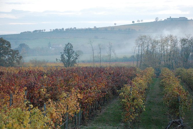 From Parma: Private Wine tour with tasting, Parma, ITALIA