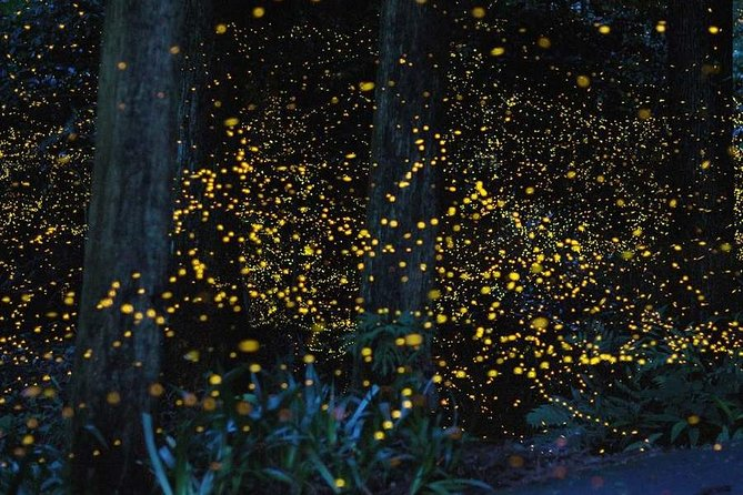 Firefly Watching Tour Package with Dinner - Bohol Philippines, Ciudad de Tagbilaran, FILIPINAS