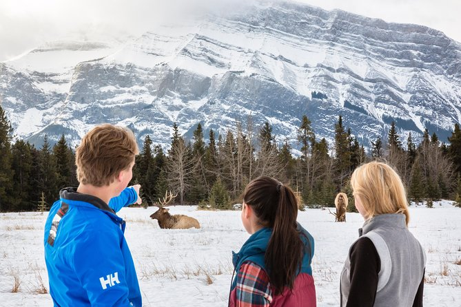 Join a personalized small-group tour and discover beautiful Banff in the winter! Over three hours, your local guide will take you to some of Banff's key landmarks as keep your eyes peeled for wildlife in their natural habitat.<br><br>The tour will include some of the most scenic and historically significant highlights of Banff such as the Fairmont Banff Springs Hotel, Bow Falls, Surprise Corner Lookout, Hoodoos Viewpoint and Lake Minnewanka. Plus, enjoy hot chocolate and maple cookies at one of the scenic stops. It's a complete orientation to Banff and a great tour for seeing wildlife in the morning!
