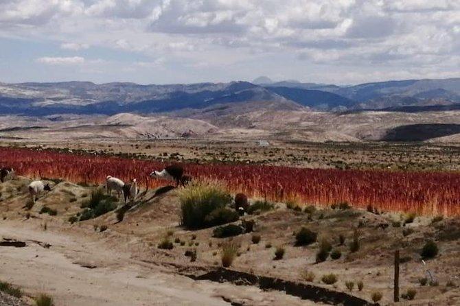 2-Days Uyuni Salt Flats including Laguna Colorada, Uyuni, BOLIVIA