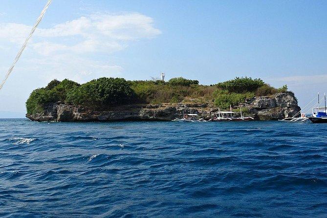 Whale Shark& Tumalog Falls & Pescador Island & Sardine Run & Turtle in One Day, ,