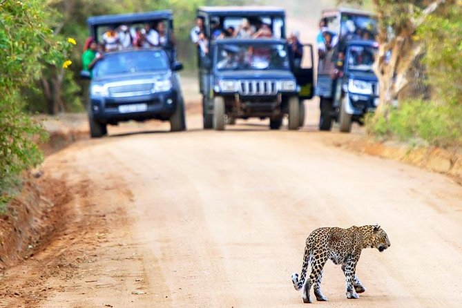 Yala National Park Safari Experience from Galle including Lunch at a Campsite, Galle, SRI LANKA