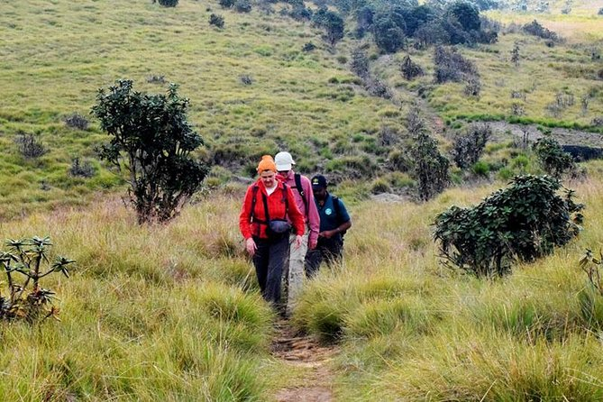 Private Hiking tour to Kirigalpoththa Mountain via Horton Plains, Nuwara Eliya, Sri Lanka