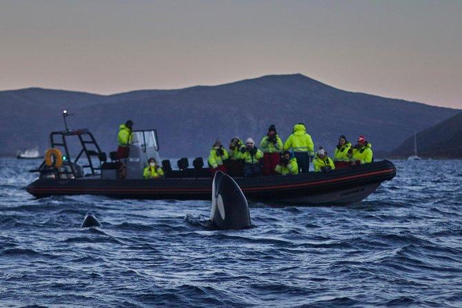 MÁS FOTOS, Whale watching in Magic Skjervoy!