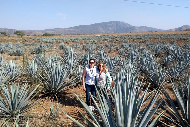 MORE PHOTOS, Tequila Tour , Ruta del Tequila