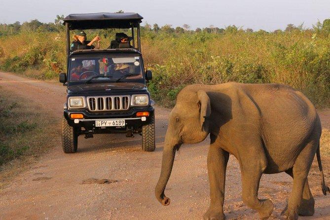 4-Day Glamping & Photography Tour, Parque Nacional Yala, SRI LANKA
