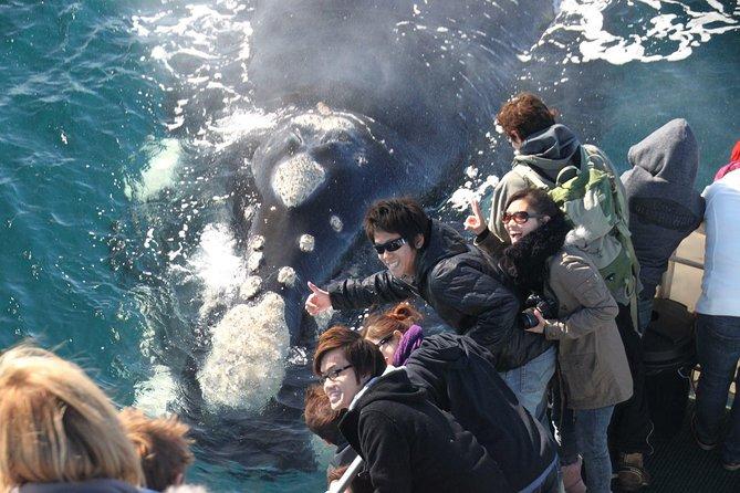 Albany Whale Watching Eco Tours, Albany, AUSTRALIA