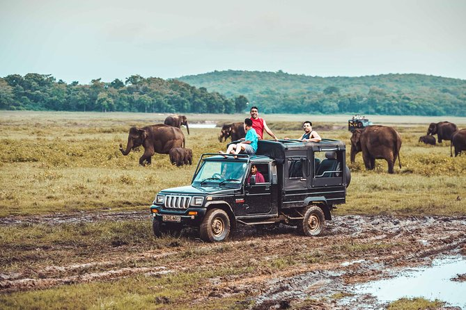 Minneriya National Park Private Jeep Safari from Habarana, Sigiriya, SRI LANKA