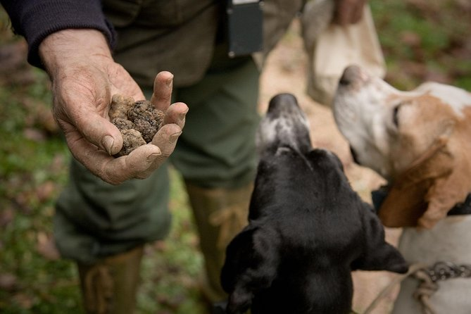 "I'm a professional truffle hunter from 3 generations in Alba. My grandfather after 2nd world war was one of the first truffle hunting/seller in Alba,he taught to my father all the secrets about the precious ""ipogean fungus"" then my father taught it to me.i'm a dog trainer & actually i've got 3 great dogs: Stella, Kelly & Perla. I would like to teach ""some""of my truffle hunting segrets to travellers. During the tour you will helped by my friend Margherita. She's an official tourist guide Cuneo province with great passion for truffles and wine providing to translate every part of the hunting."