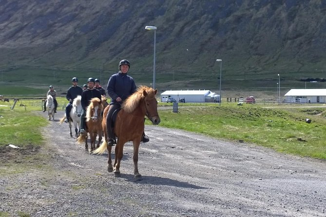This isyourprivate and personal tour. Your guide will pick you up in Isafjordur and take you to our stables in Engidalur. There you will be given the proper safety gear and instructions on how to ride the Icelandic horse in our indoor arena. When our guide feels you are ready it´s off to the beautiful Engidalur valley on horseback. Our guide has a camera on you during the whole ride so you can relive it again when you get home. Pictures, video footage and transportation are all included inthe price.
