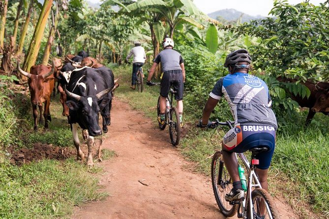 Lake Victoria Island Cycling Tour from Kampala, Kampala, UGANDA