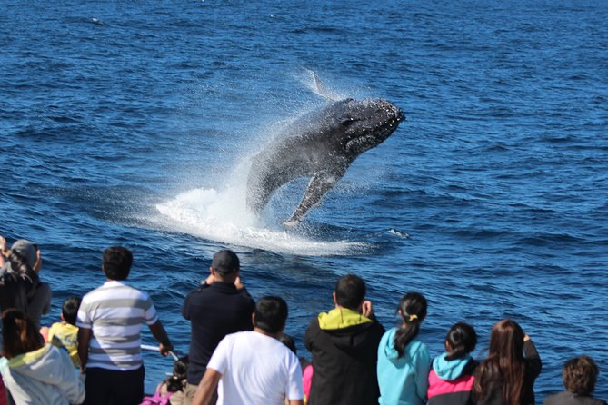 Tangalooma Island Resort Dolphin Viewing Day Cruise with Whale Watching, Brisbane, AUSTRALIA