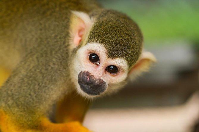 Exotic Costa Rica, Liberia, COSTA RICA