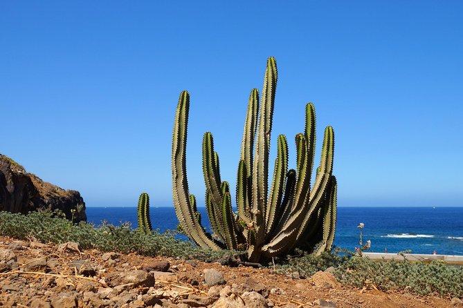 Private Arrival or Departure Transfer: Santa Cruz de Tenerife, Tenerife, ESPAÑA