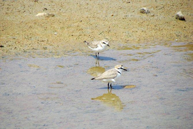 Meio-dia de observação de aves a volta de Faro, Lagos, PORTUGAL