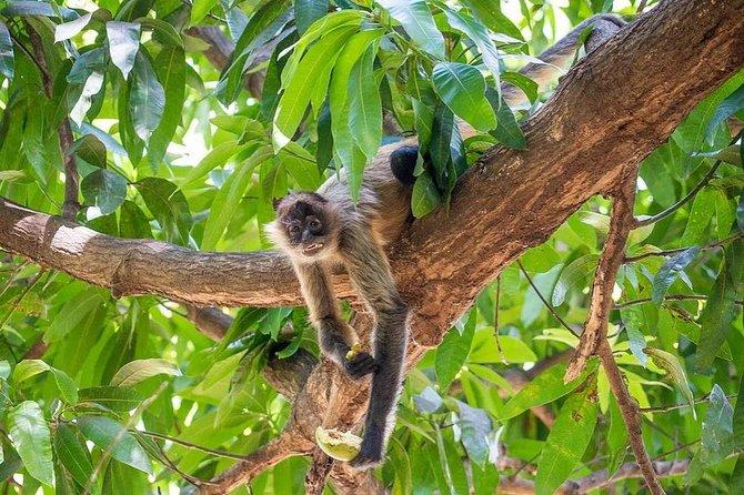 Safari por el río de la selva del Parque Nacional Palo Verde, Liberia, COSTA RICA
