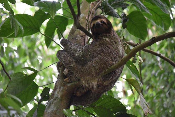 Sloth Adventure From Guanacaste, Liberia, Costa Rica
