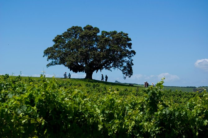 Waiheke Island Wine Day Tour, Isla Waiheke, New Zealand