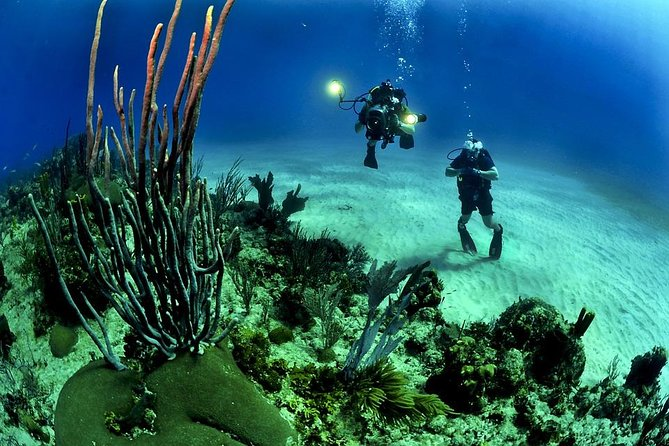 Try the experience of scuba diving in Guadeloupe, in the heart of a national park, in the famous Cousteau Reserve. You will have nothing to bring with you because all of the equipment (scuba-gear) is on board. Share our passion and enjoy the experience of diving in Guadeloupe.<br><br>All of our activities are supervised by qualified only instructors or state graduates who will accompany and advise you throughout your diving adventure.<br><br>For the young and the old you can discover the underwater worlds and enjoy watching the green sea turtles of Malendure Bay swimming safely in peace. You get to go on 2 separate dives on this activity.