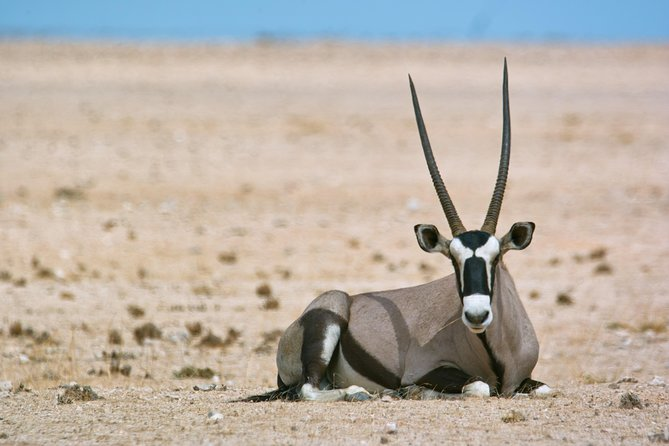 This tour takes you into the Namib Naukluft Park in search of our local wildlife. This is a great tour that starts/ends in Walvis Bay/ Swakopmund, for the traveller that wants to view fantastic landscapes, wildlife and enjoy taking photos.