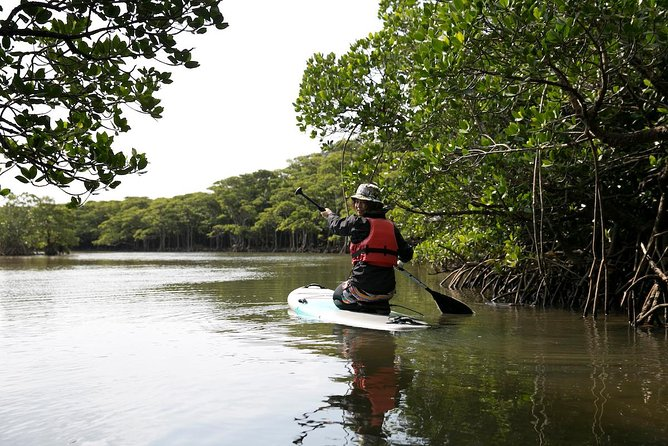 Experience the mangrove on ishigaki by SUP! Relax and watch the mangrove go by while you float down the river with the sound of the birds. The mangrove is more shelted than the sea so you can enjoy a more relaxed tour when compared to paddling on the ocean. Beginners are welcome on the Mangrove tour!