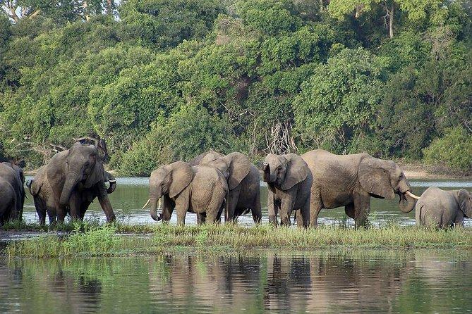 6-Day Safari to Southern Tanzania from Dar-Es-Salaam, Dar es Salaam, TANZANIA