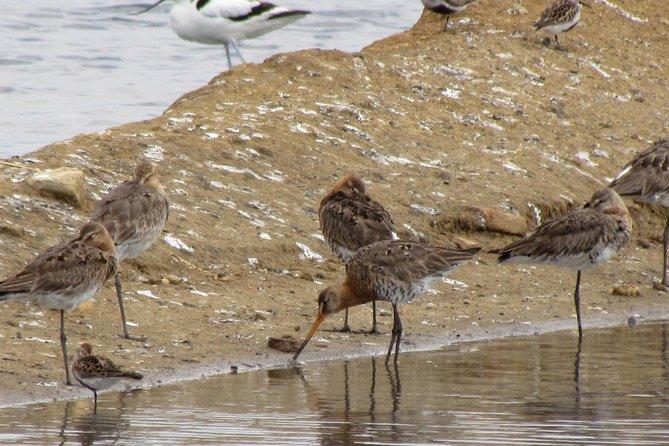 Meio-dia de observação de aves a volta de Tavira, Lagos, PORTUGAL